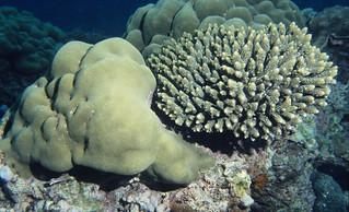 Healthy coral assemblage, Comoros. | by Derek Keats
