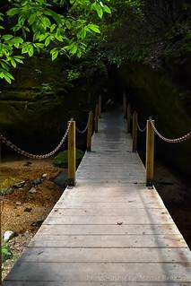 Exploring Dismals Canyon in Haleyville, AL - Swinging Bridge