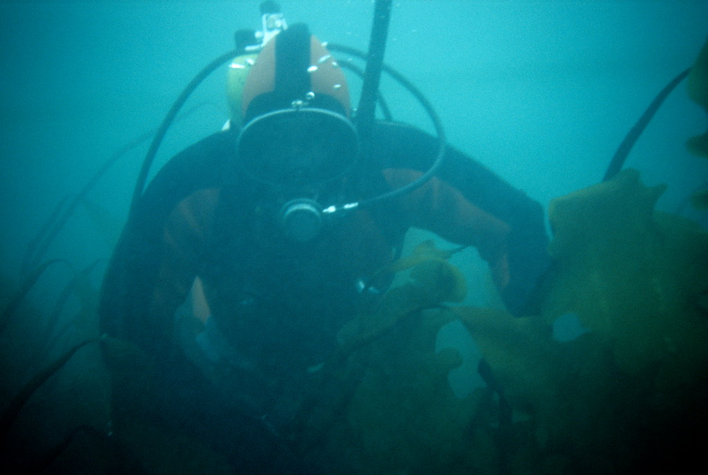 Diving among the Arctic kelps.