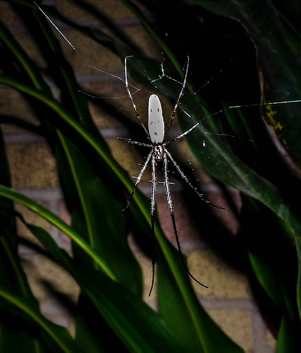 Long legs | by AtchisonGallery
