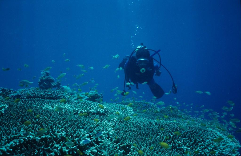Diving off Cebu, Philippines.