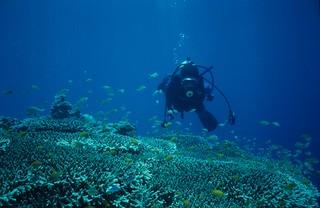 Diving off Cebu, Philippines. | by Derek Keats