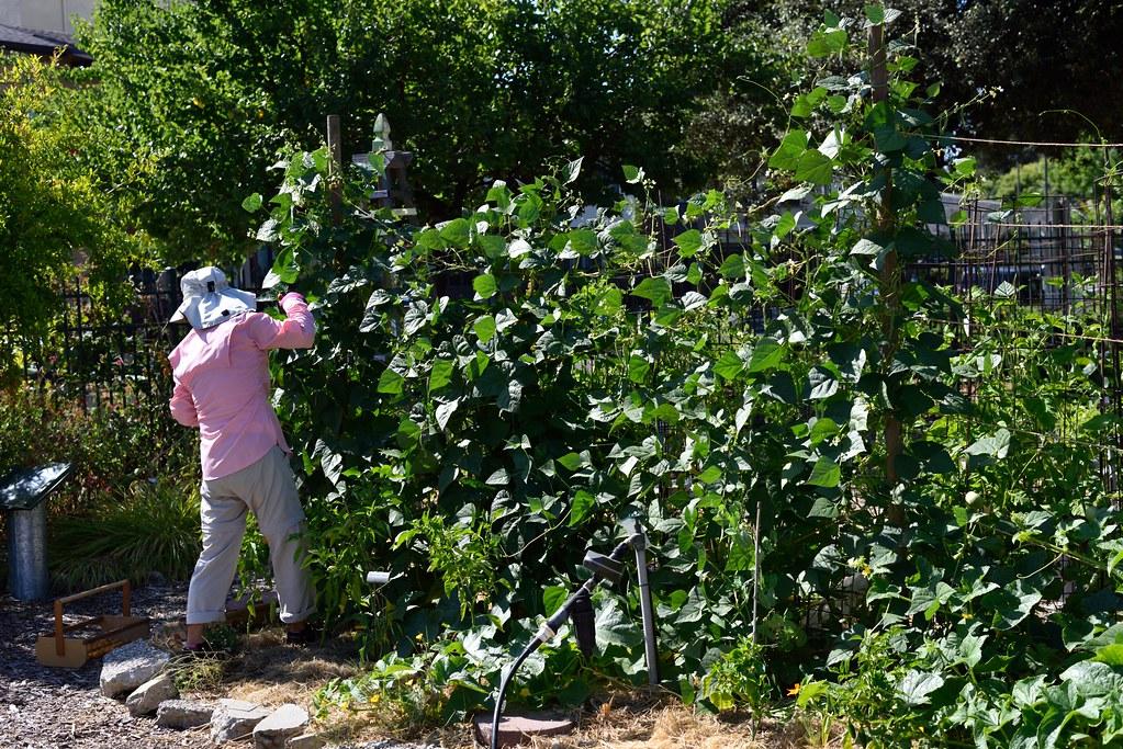 Dsc 4293 master gardeners of santa clara county flickr - Master gardeners santa clara county ...