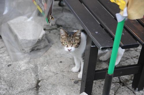 Cat | by kuribo