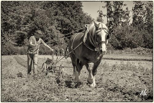 ploughing-