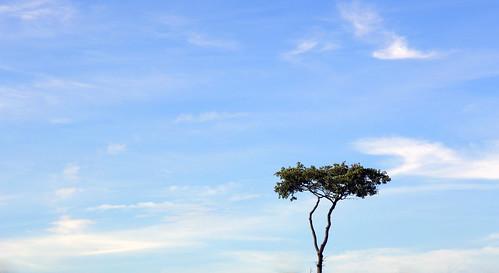 uk camp england sky cloud tree field festival wales canon landscape eos pyramid britain outdoor farm stage cymru cardiff glastonbury somerset caerdydd 5d agriculture glastonburyfestival worthy pyramidstage pilton 2015 worthyfarm wentloog stevegarrington