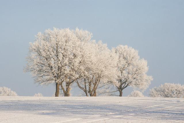 Gefrorene Landschaft aus Reif und Schnee