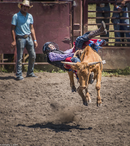 calfiornia duncanmills bulls riders rodeo youth riding steer bucking falling dust horns off
