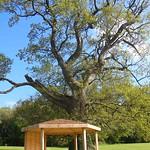 Gazebo and Old Oak Tree