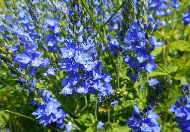 Spring Flowers (20)