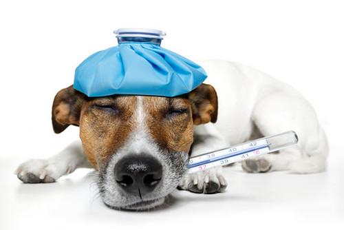 Állatorvos asszisztens