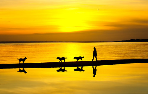 west witterings pentax sunset sunrise seascape silhouette reflections dogs k3 ii 1685mm