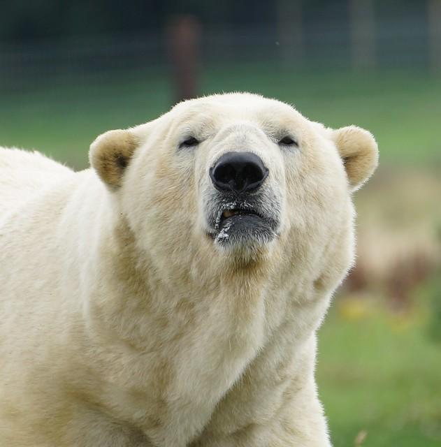 Yorkshire Wildlife Park 27.07.17 089