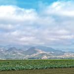 Camarillo Landscape