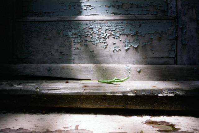 cellar door stoop