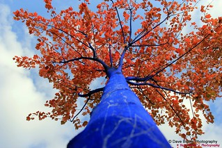 The Blue Trees - Ambleside - West vancouver BC