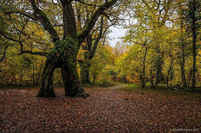 El árbol que se alegraba de vernos