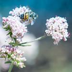 The Pollen Blues