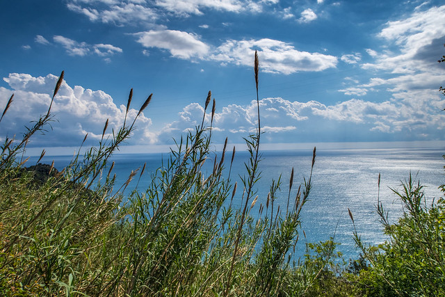 Cinque Terre landscape