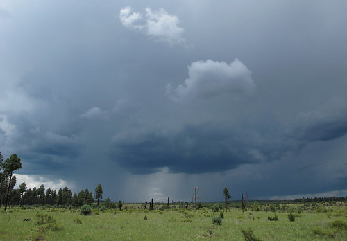 arizona sky stormclouds forest rain weather monsoonskies downpour monsoonthunderstorm navajocounty landscape view monsoon stormy skyscape thunderstorm summermonsoon summerstorms summer mountainstorm tstorm monsoon2017 arizonamonsoon rimcountry apachesitgreavesnationalforest outdoors exploration adventure discovery wildplaces southwest nature canonpowershotg12 pspx9 zoniedude1 earthnaturelife therebeastormabrewin