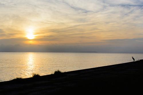nikon water livingston 2015 lake morning blue texas d7100 sunrise landscape boating august sky bird wildlife summer reflection nikond7100