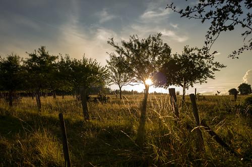 landscape nature sunset sunsetlandscape fields fieldssunset goldenhours belgium green sky