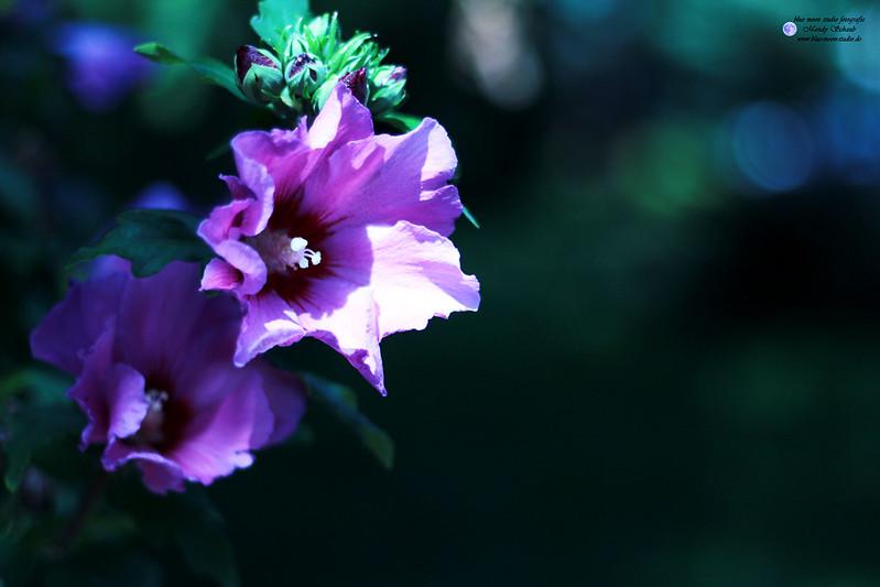 Blüten, Blossoms