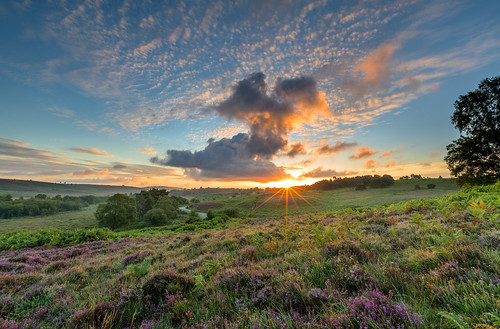 newforest rockfordcommon sun sunrise cloud bracken heather flare tree mist landscape