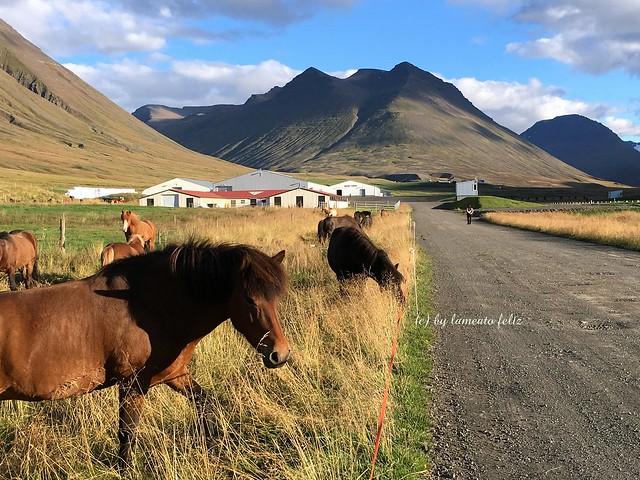 Paisaje en Hòlar-Islandia.