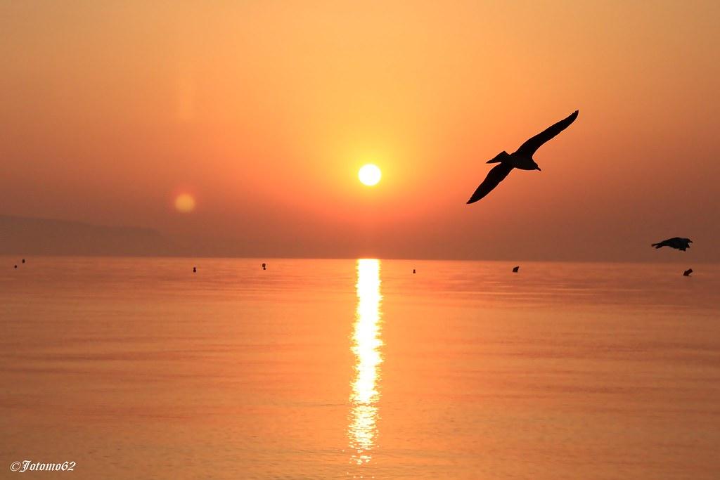 Gaviotas al Amanecer