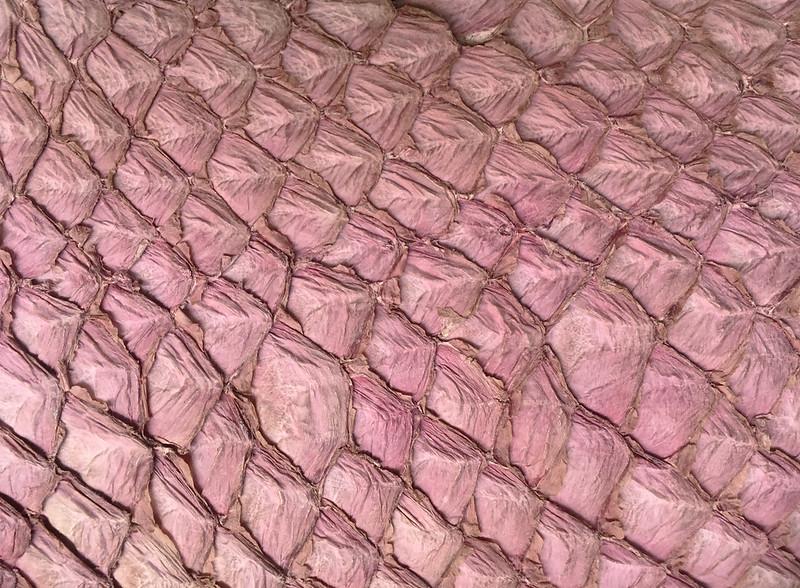 IMG_68Western Australia - Esperance - fish-skin85