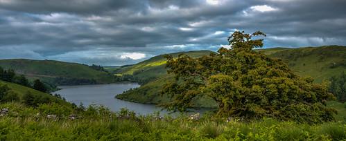 wales tree d750 landscape britain green lake water powys sky sunlight hills panorama uk clouds llanidloeswithout unitedkingdom gb