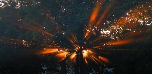 sunrise blasting out tree jacko linear park rivervalley swords co dublin ireland sun sunshine suburb sunsetmode thewardriver ward river trees explosion abstract surreal art arty artofimages artataglance artistic artyfarty dark darkside morning solar