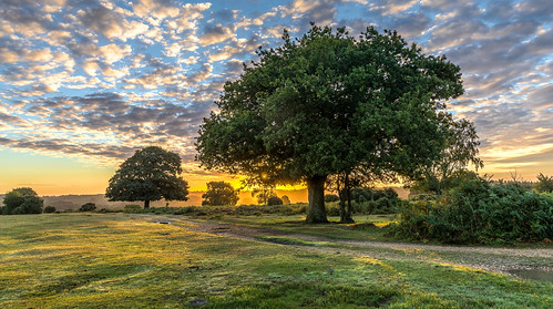 landscape newforest sunrise flare tree oak grass path sun