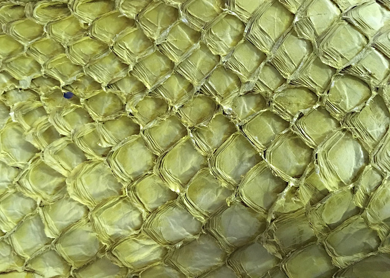 Western Australia - Esperance - fish skin