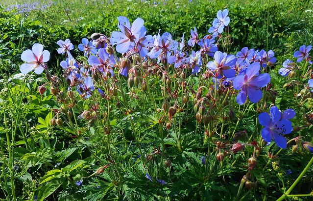 Spring Flowers (21)