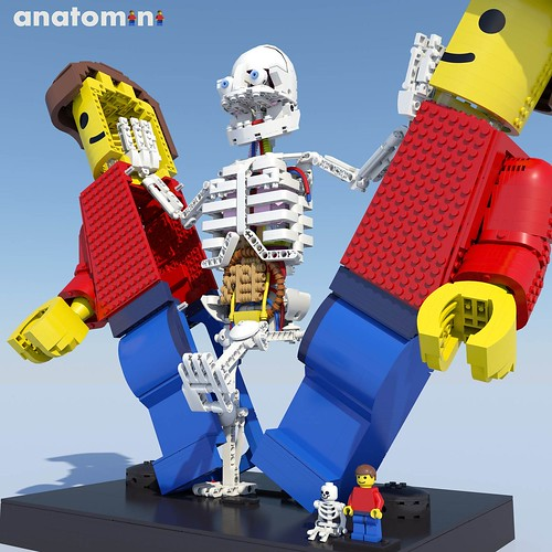 Anatomini square fig 00 frontpage