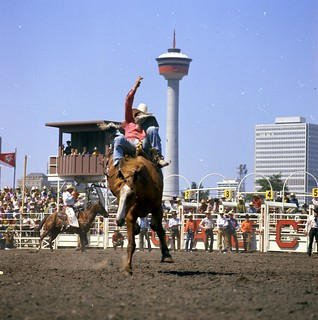 Bronc riding at the Calgary Stampede