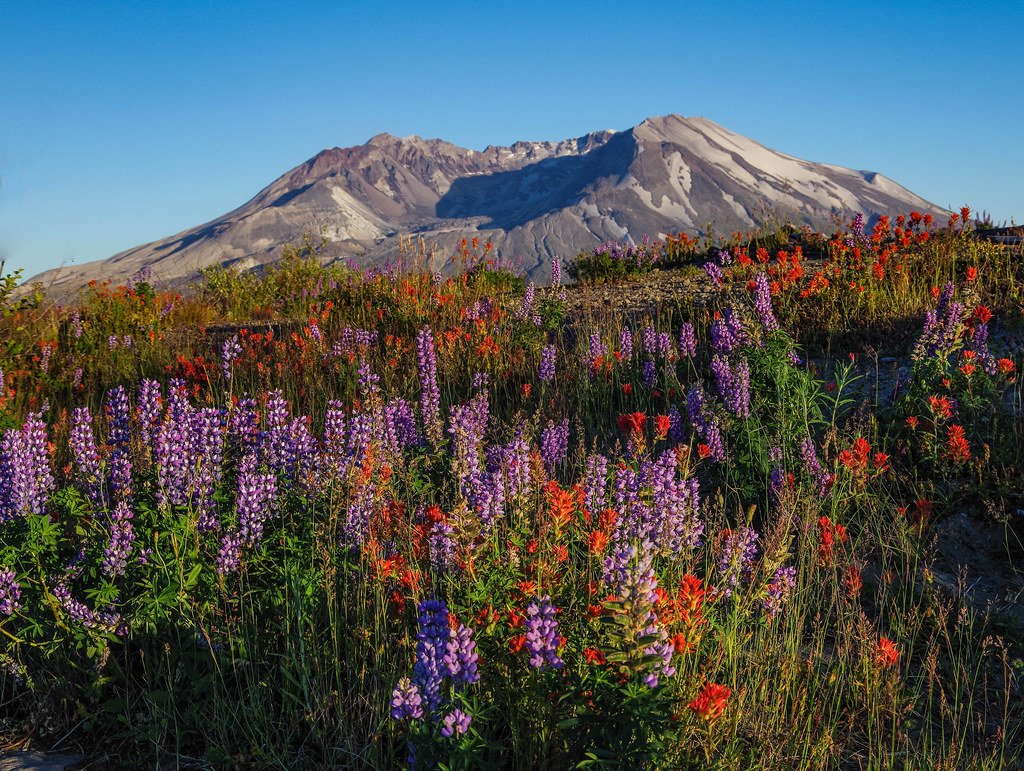 Mt. St. Helens & flowers - Day 198 / 365