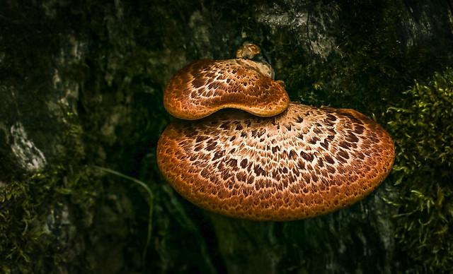 Tree Trunk Fungi.