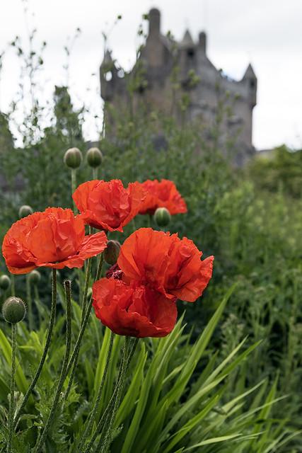 Au jardin du chateau de Cawdor
