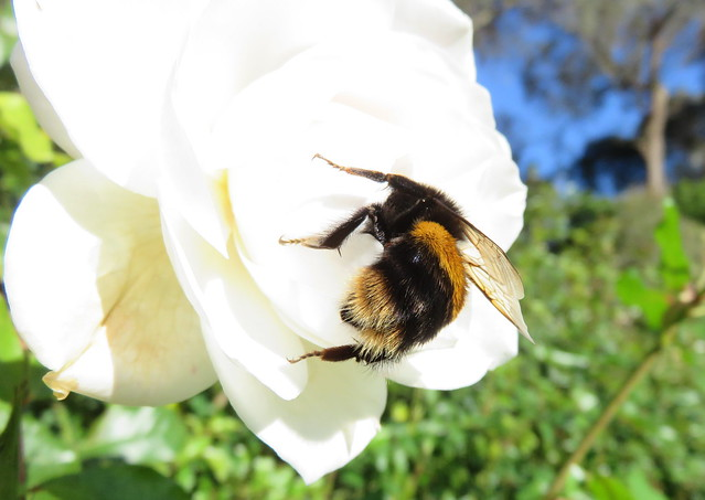 May I proudly present to you ... Bumble Bum! Pt.1. *