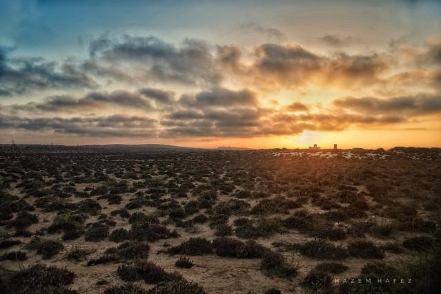 Desert Beauty ..