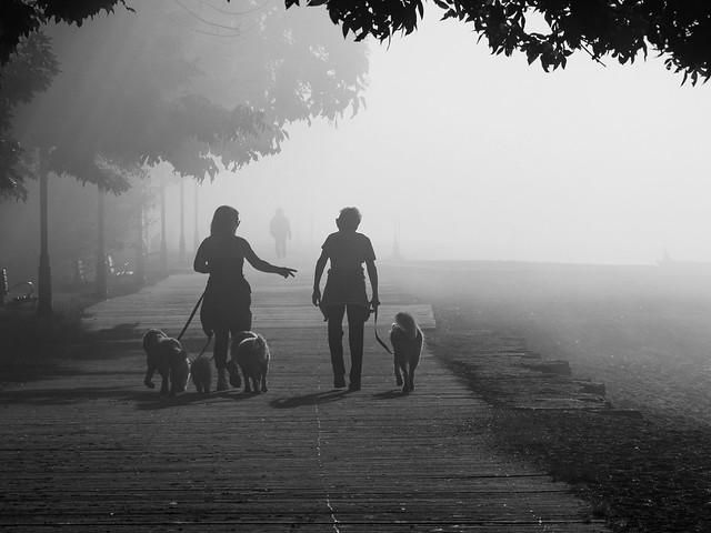 Early morning fog on the boardwalk.