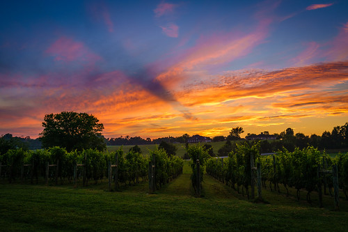 sunset maryville sonya7riialpha ilce7rm2 tennessee usa landscape vineyard sky skylover colour tamron35mmf18sp