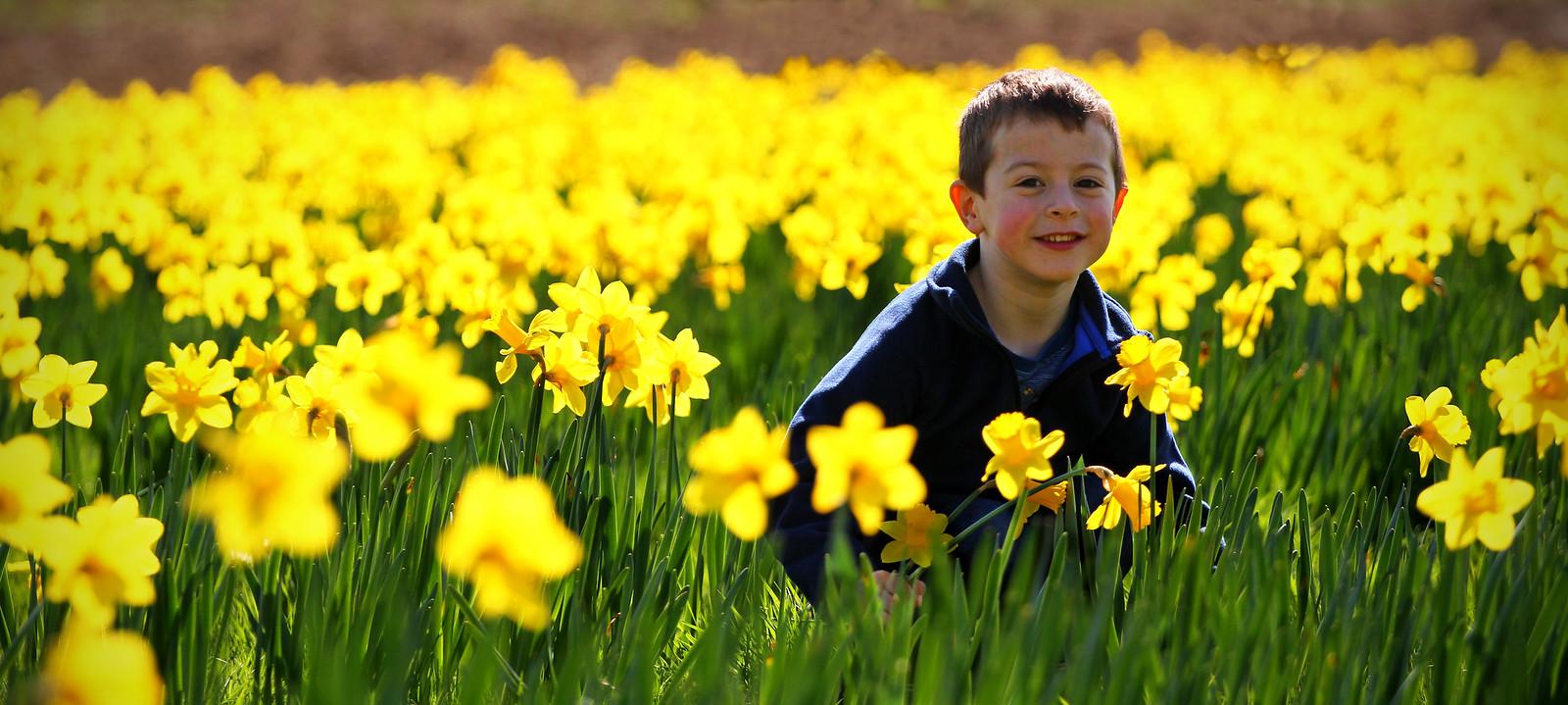 Ben Daffodils