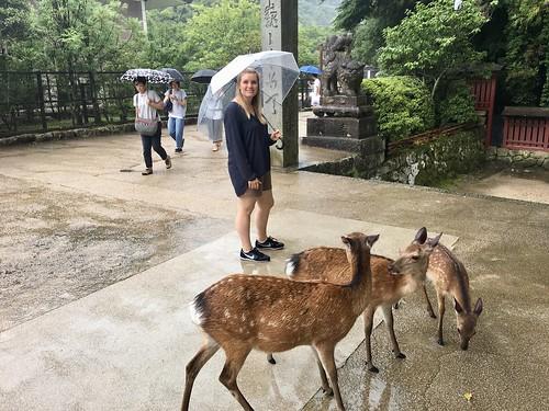 Rehe auf Miyajima   by chillyistkult