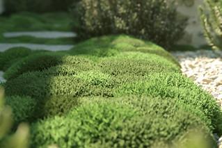 Luxembourg's Garden   by BBB3viz