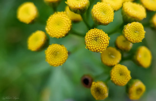 Something Yellow | by Vladimir Lazarov