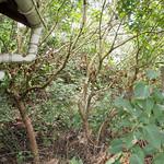 Retro selvaggio del giardino